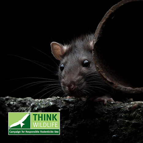 burnley-pest-control-services-help-rats-mice-crawling-insects-east-lancashire-wallace-harvey-dream-pest-issue-atlas-environmental-services-ltd-professional-pest-control-prevention-solutions-east-lancashire-bird-control
