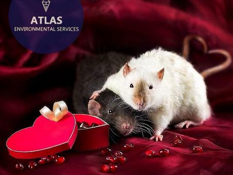 Valentines Wishes.....