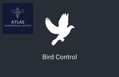 atlas-environmental-services-ltd-bird-control-proofing-commercial-pest-control