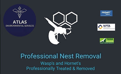 pest-control-burnley-wasp-nest-removal-wasp-treatment-burnley-pendle-hyndburn-accrington-blackburn-wasp-nest-help-domestic-lancashire-atlas-environmental-services-ltd