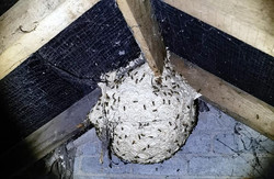 wasp-nest-treatment-burnley-lancashire-east-lancashire-wasp-control