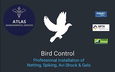 pest-control-burnley-bird-control-bird-proofing-lancashire-spiking-netting-commercial-bird-prevention-lancashire-atlas-environmental-services-ltd