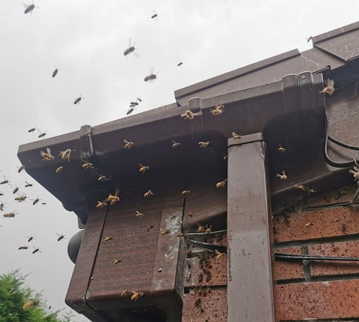 wasp-nest-treatment-burnley-wasp-removal-burnley-wasp-nest-burnley