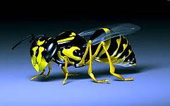 burnley-council-wasp-nest-help-removal-treatment-east-lancashire