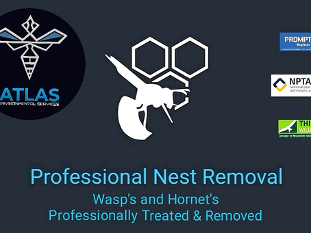 Wasp Nest Removal Specialists for East Lancashire....