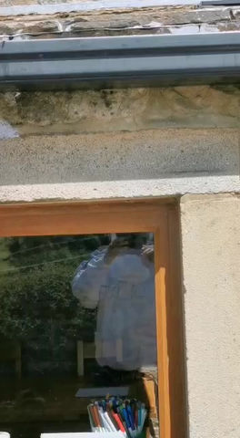 Wasp Nest Treatment in Pendle - Salterforth, Lancashire....