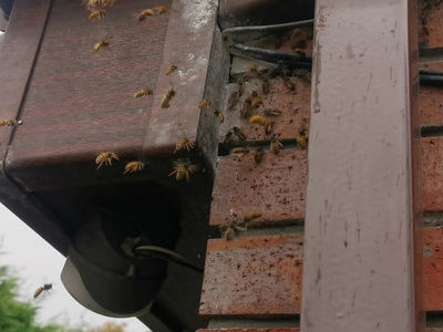 Wasps Thriving In Mid October......