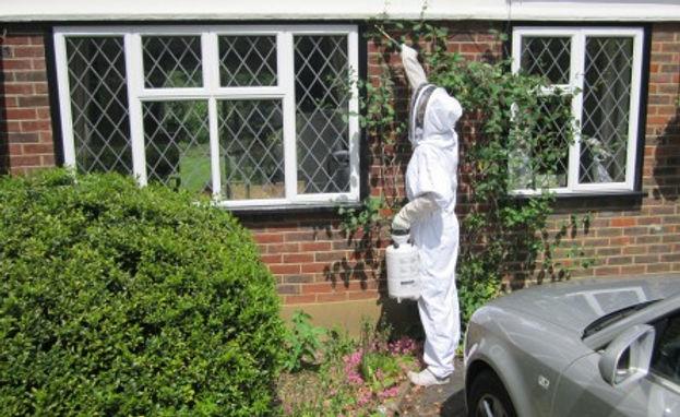 burnley-wasp-nest-treatment-lancashire.j