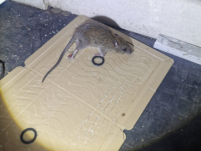Pest control programme set up in Blackburn today.....