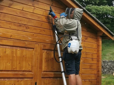 Wasp Nest Removal....