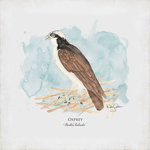 """Osprey"""