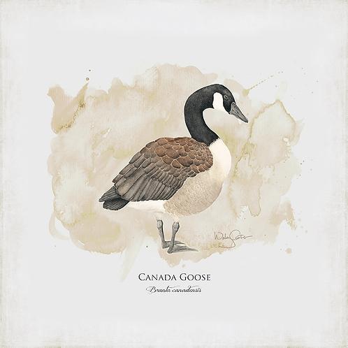 """""""Canada Goose"""""""