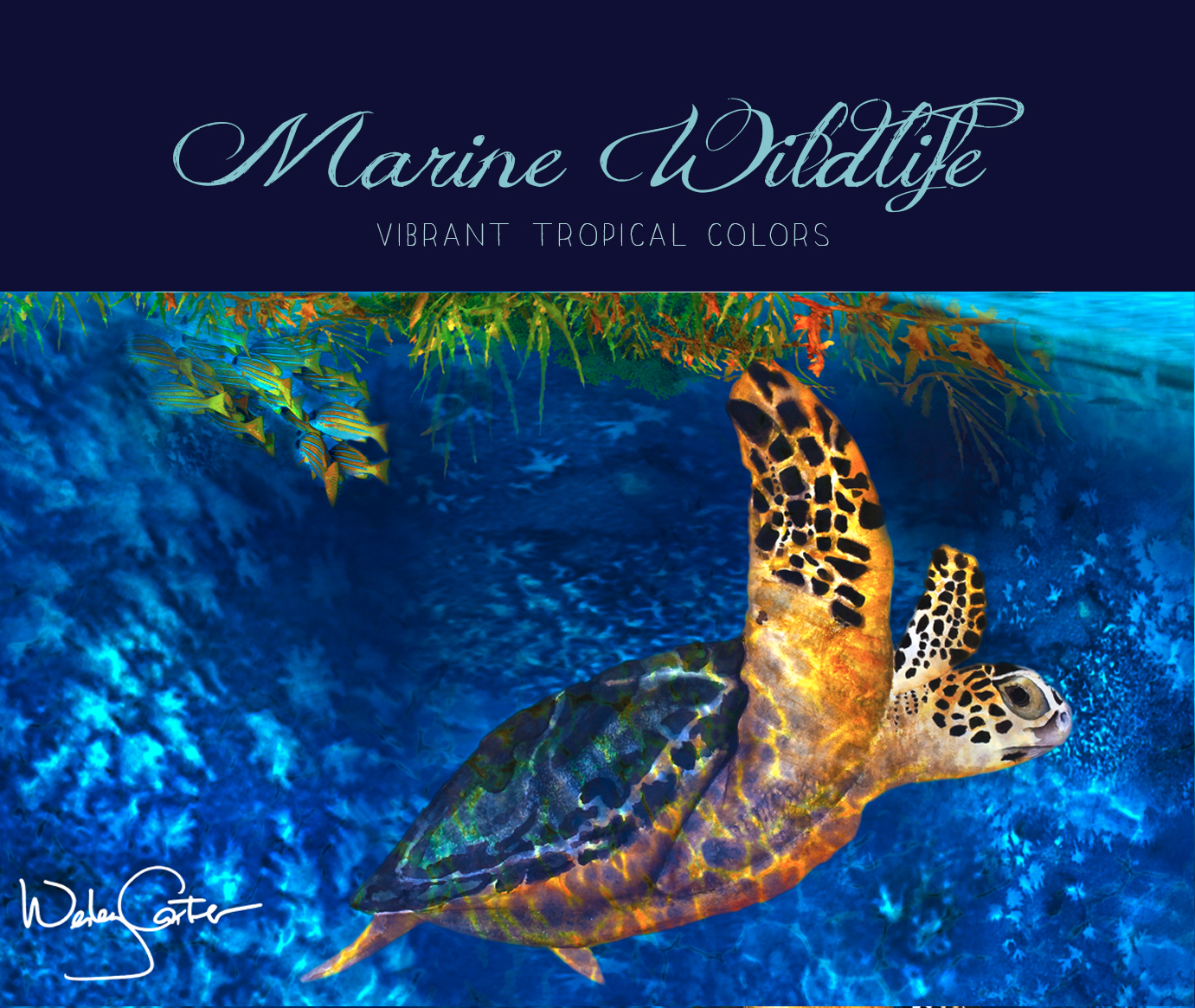 2Marine Wildlife