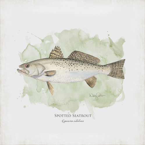 """Spotted Sea Trout"""