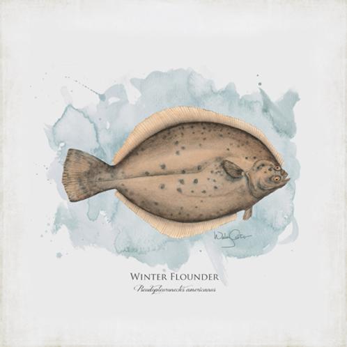 """Winter Flounder"""