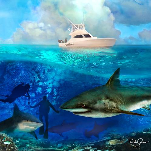 """Shark Dive"""