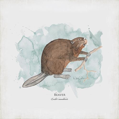 """Beaver"""