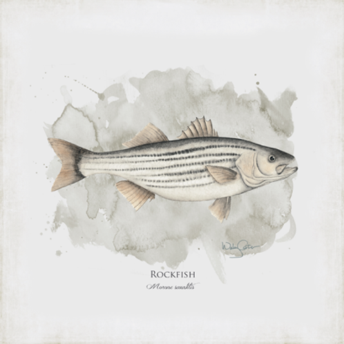 """Rockfish"""