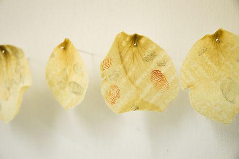 Petals - Sophie Erin Cooper-7.jpg