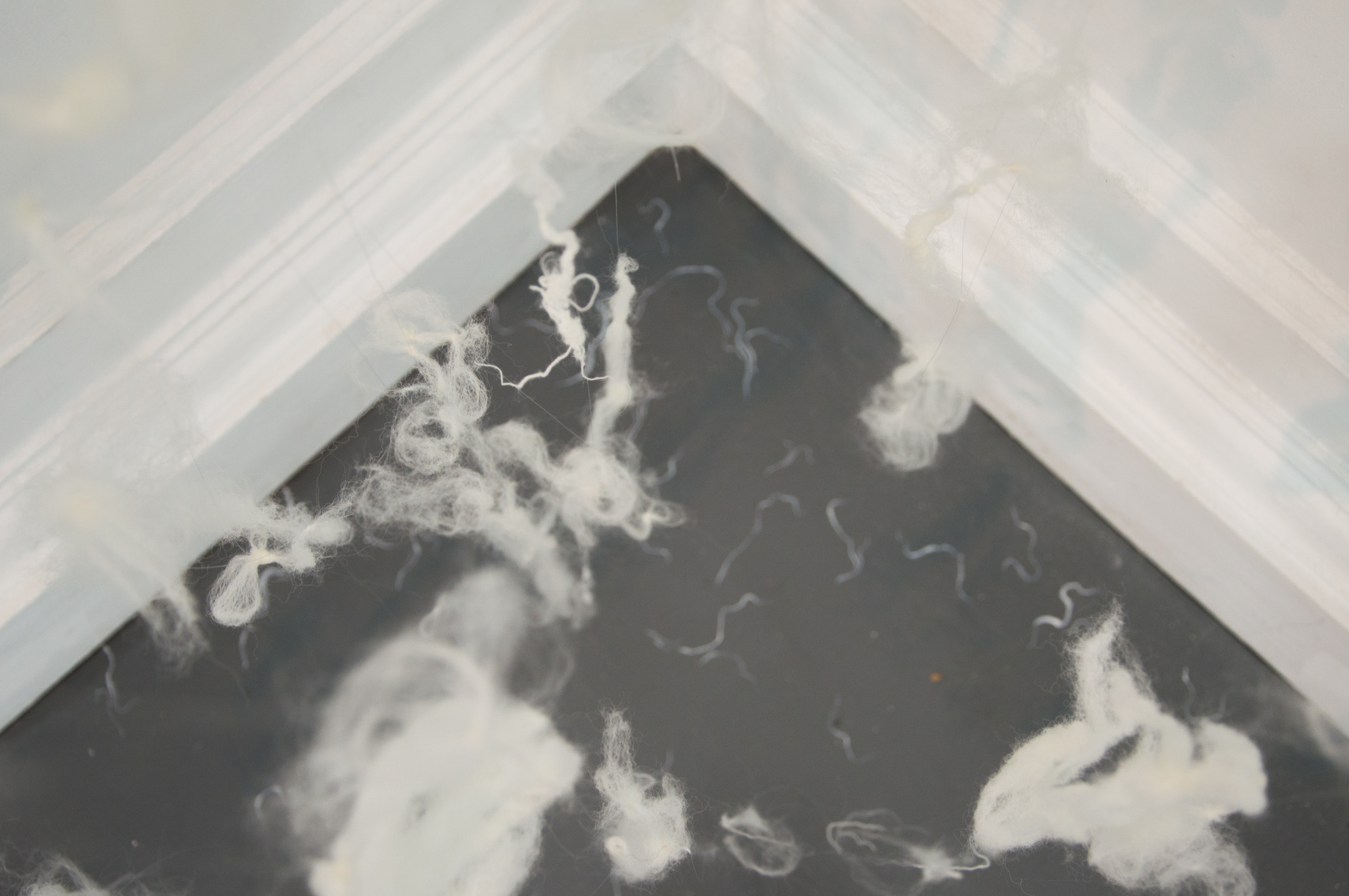 Forgotten Fibres Installation - Sophie E