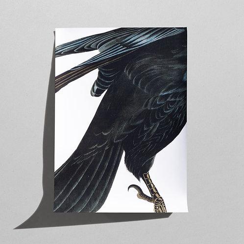 Plakat A1 Raven