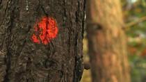 Volgende fase landduinherstel: markeren bomen