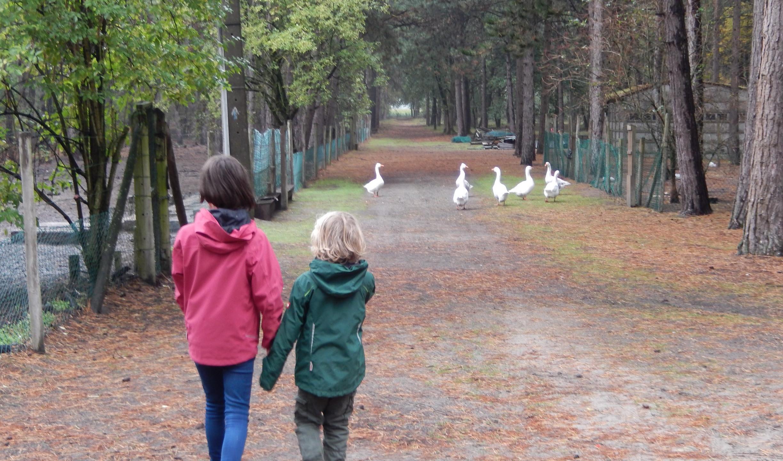 kinderen amuseren zich in het park