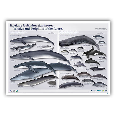 Whales and Dolphins of the Azores Poster