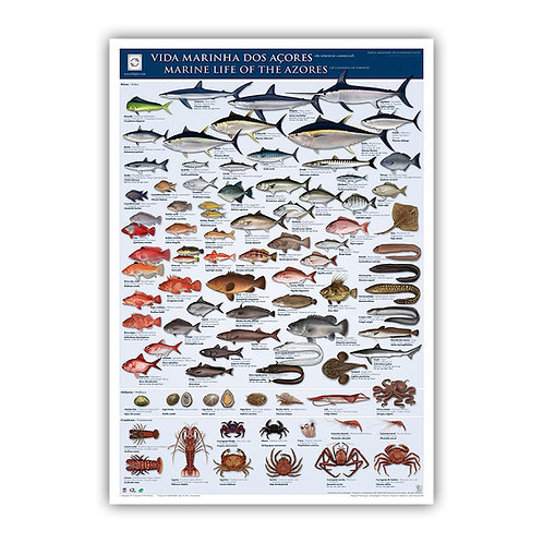 Marine Life of the Azores Poster 2016
