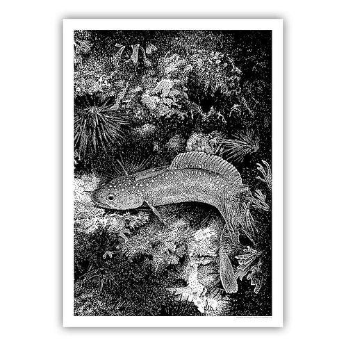 Open Edition Print - rockling 45x62cm