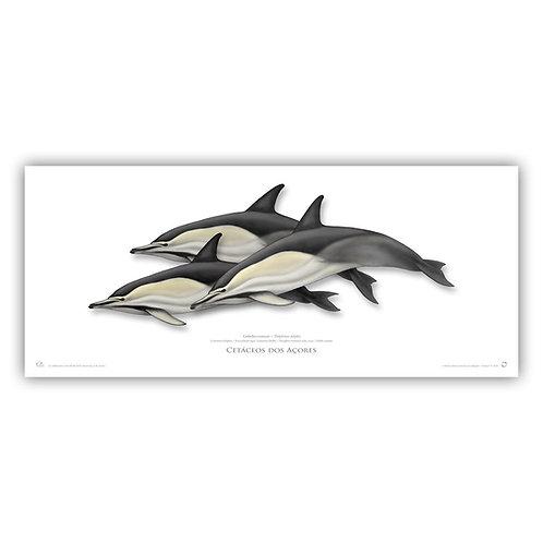 Limited Edition Print - Delphinus 90x38cm