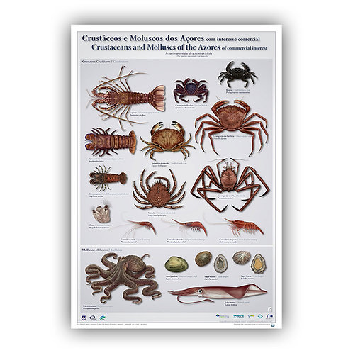 Crustaceans & Molluscs of the Azores Poster