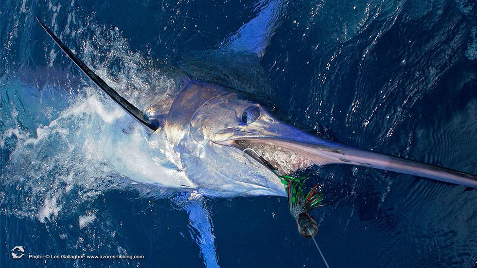 AZORES MARLIN FISHING