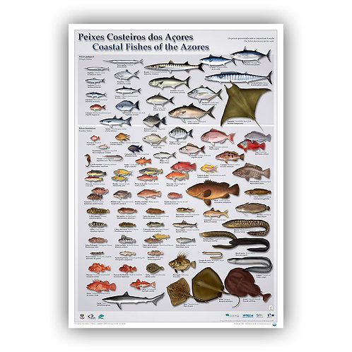 Coastal Fishes of the Azores Poster