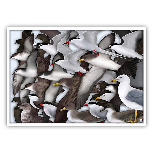 Open Edition Archival Print - Seabirds 64x45