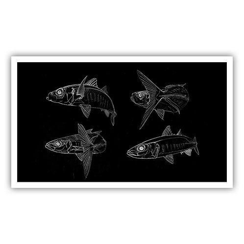 Open Edition Print - Bluejack / chicharro 45x26.5cm