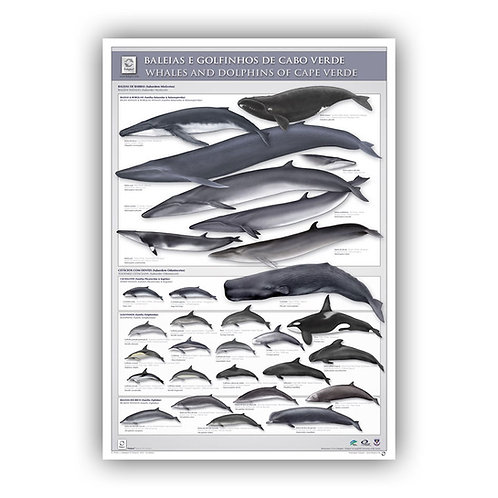 Cetaceans of the Cape Verde Poster
