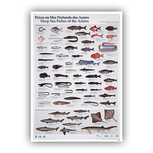 Deep Sea Fishes of the Azores Poster
