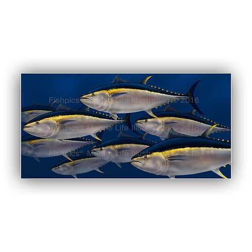 The bluefins - limited edition print on canvas (200cm x 100cm)