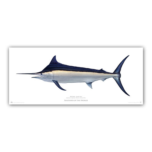 Limited Edition Archival Print - Black Marlin 2021 (200cm)