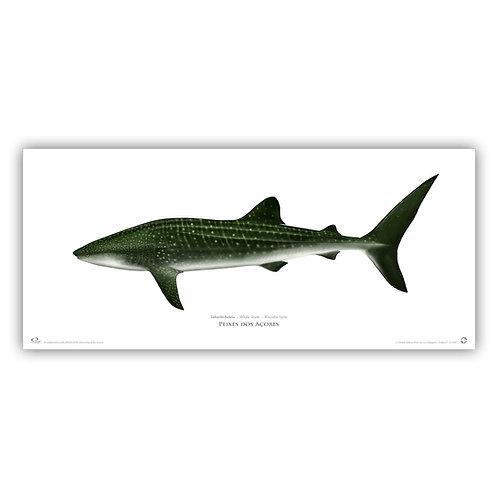Limited Edition Print - Whale shark  70x30cm