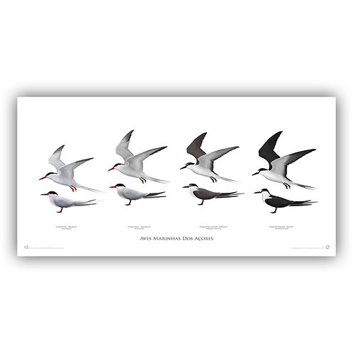 Limited Edition Print - Terns (100 cm)