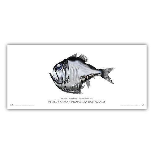 Limited Edition Print - Hatchet fish (55x30cm)