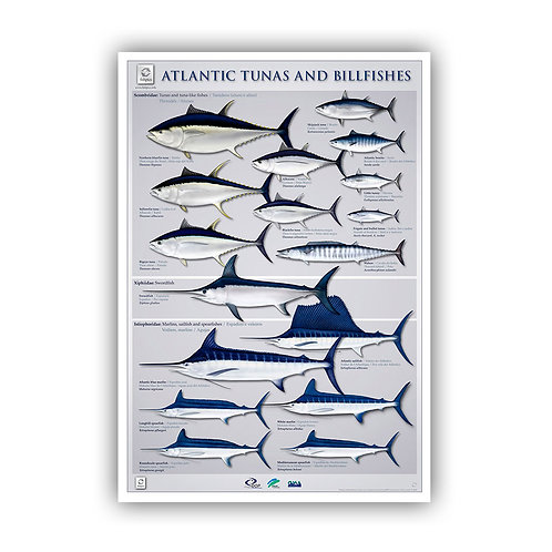 Atlantic Tunas and Billfishes Poster