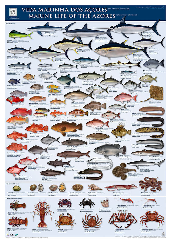 Azores seafood marine life poster