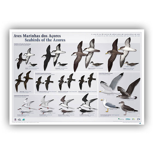Seabirds of the Azores Poster