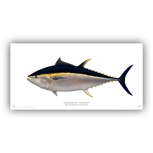 Limited Edition Print - Bluefin tuna 2014 (100 cm)