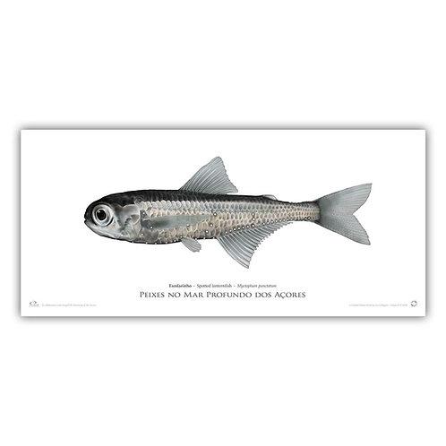 Limited Edition Print - Lanternfish (55 cm)
