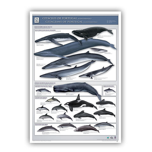 Cetaceans of Portugal (continental) Poster