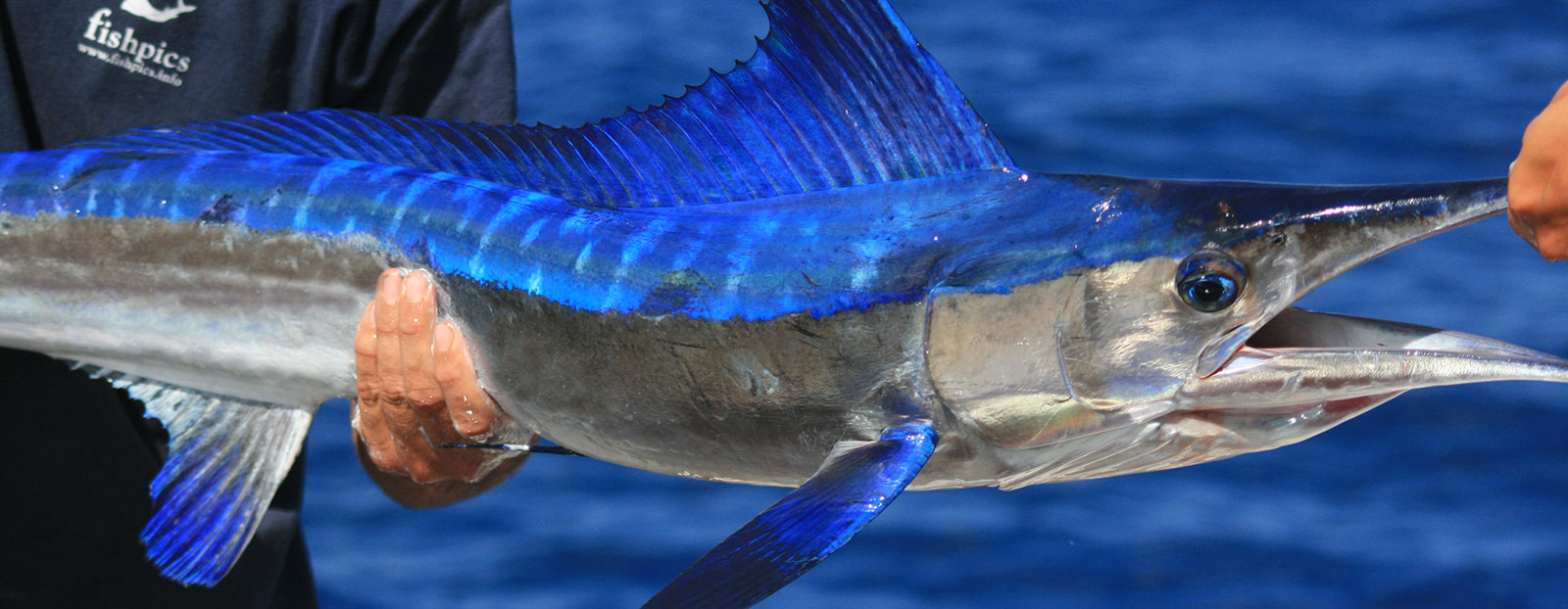 azores_spearfish